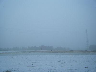 2月20雪