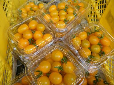 7月31イエローミニトマト