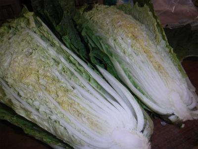 8月25白菜